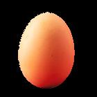 Frische Eier vom Hofladen Größe L