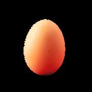 Frische Eier vom Hofladen Größe S